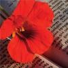 Il Giardino Poetico