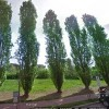 Intitolazione giardino a Marie Curie