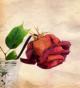 Le rose spezzate