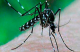 Lotta alla zanzara