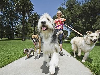 Lavorare con gli animali lavoro e orientamento rete for Lavorare con i cani
