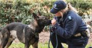 Cane e agente unità cinofila