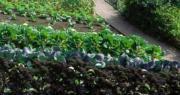 orti coltivati